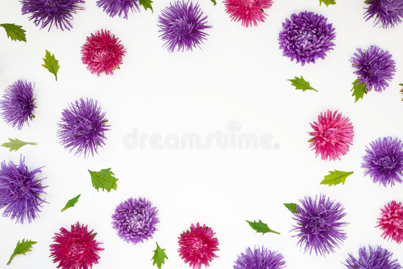 Pattern with Aster flowers on white background stock images