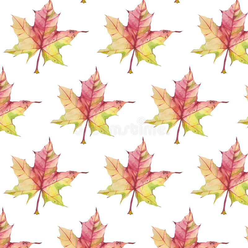 Pattern with autumn maple leaf on white background. Seamless pattern with watercolor autumn maple leaves isolated on white background stock photography