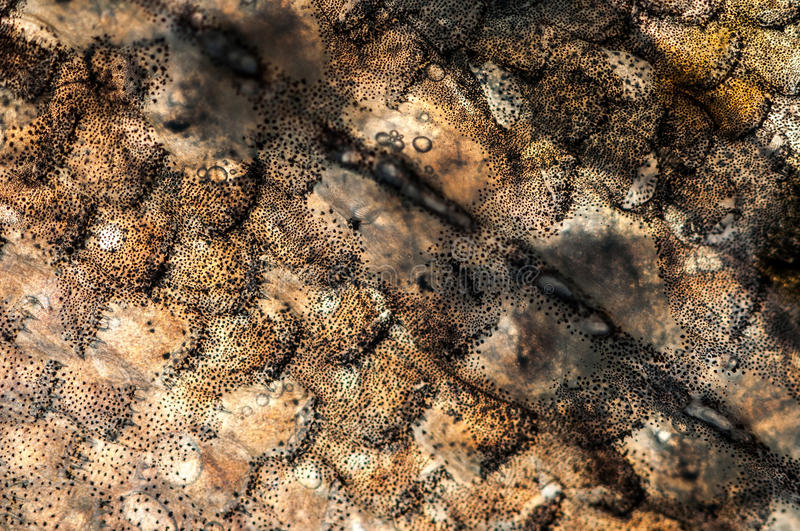 Pattern. A beautiful brown and black camouflage pattern stock image