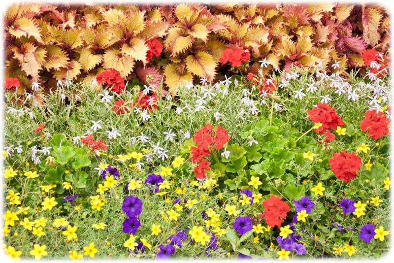 Pattern. Beautiful Vivid Nature Flowers Pattern stock images