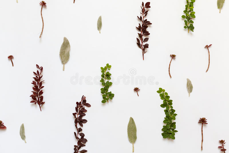 Sedum Or Stonecrop Plants With Red Leaves Stock Photo