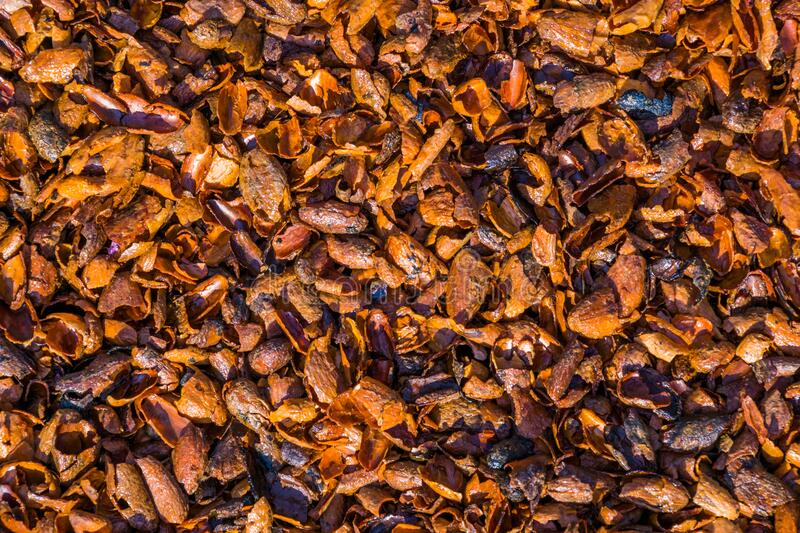 Pattern of cacao shells in closeup, popular aromatic garden ground covering and mulch. A pattern of cacao shells in closeup, popular aromatic garden ground stock image