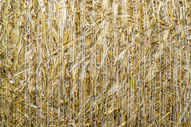 Pattern closeup Natural texture of straw bale of cereals wheat grain surface rolled royalty free stock images