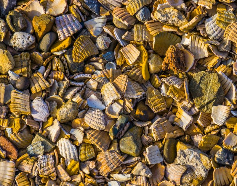 Pattern of crushed seashells and rocks, decorative covering material for the garden and walking paths, background patterns. A pattern of crushed seashells and royalty free stock image