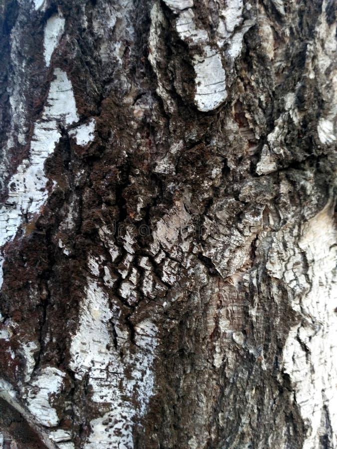 Pattern of dark birch bark. Dark birch bark texture natural background close-up. Birch tree wood texture, natural birch. royalty free stock image