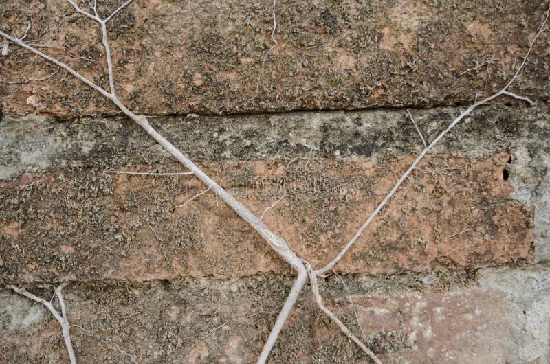 Art of roots and dried moss on brick wall stock photos