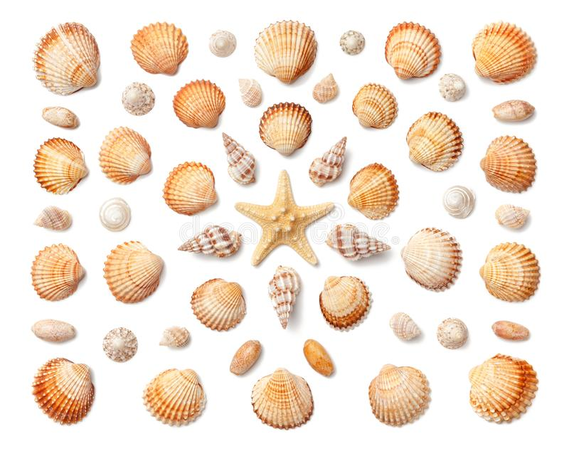 Pattern of exotic sea shells and starfish isolated on white back. Ground. Flat lay, top view royalty free stock images