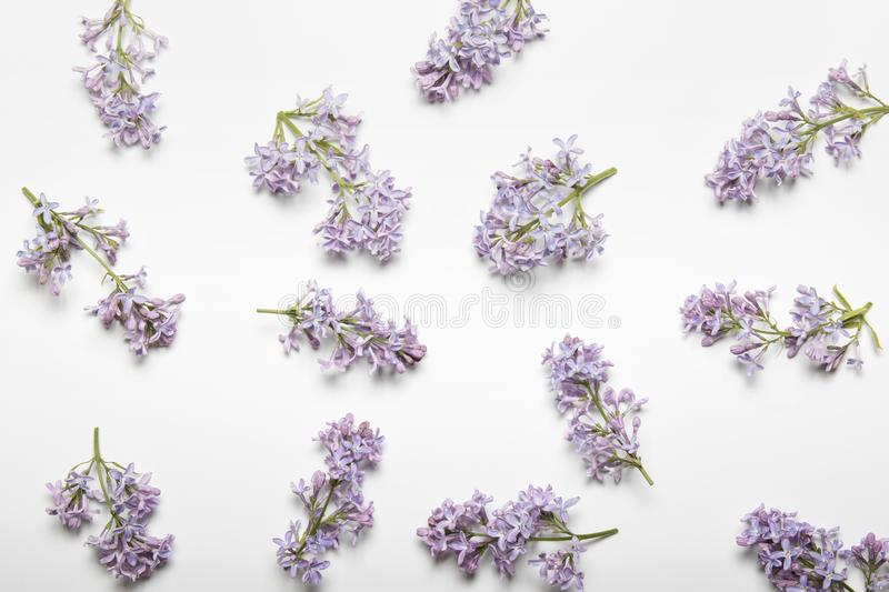 Pattern with flowers, lilac, branches and leaves isolated on white background. Top view stock photos