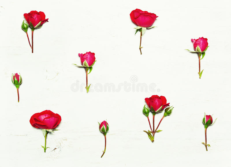 The pattern of flowers, red roses. On a white background. Top view, flat stock photo
