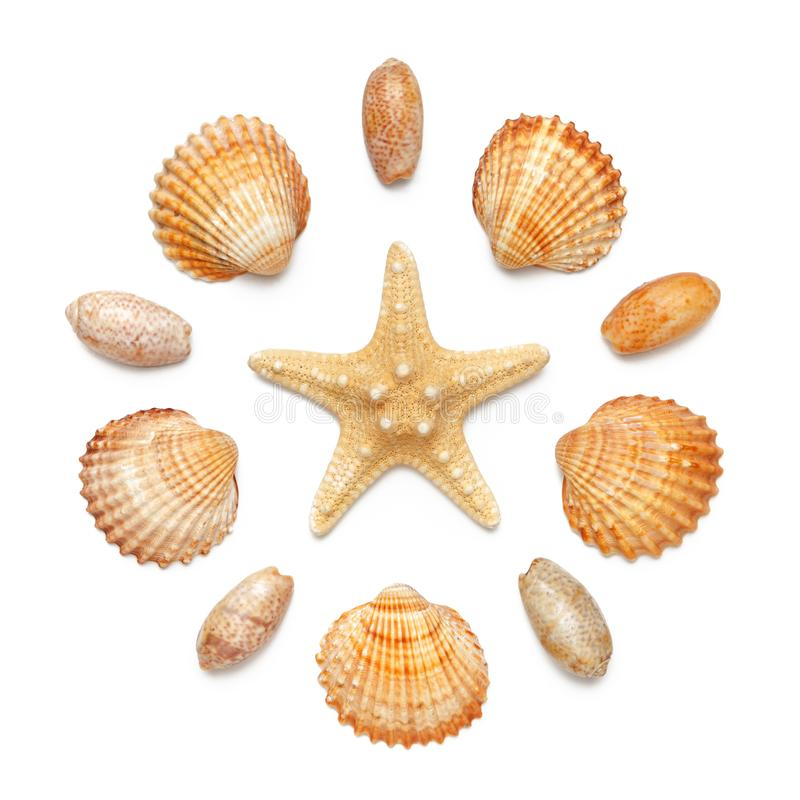 Free Pattern In The Form Of A Circle Of Sea Shells And Starfish Isolated On A White Background. Royalty Free Stock Images - 119978779
