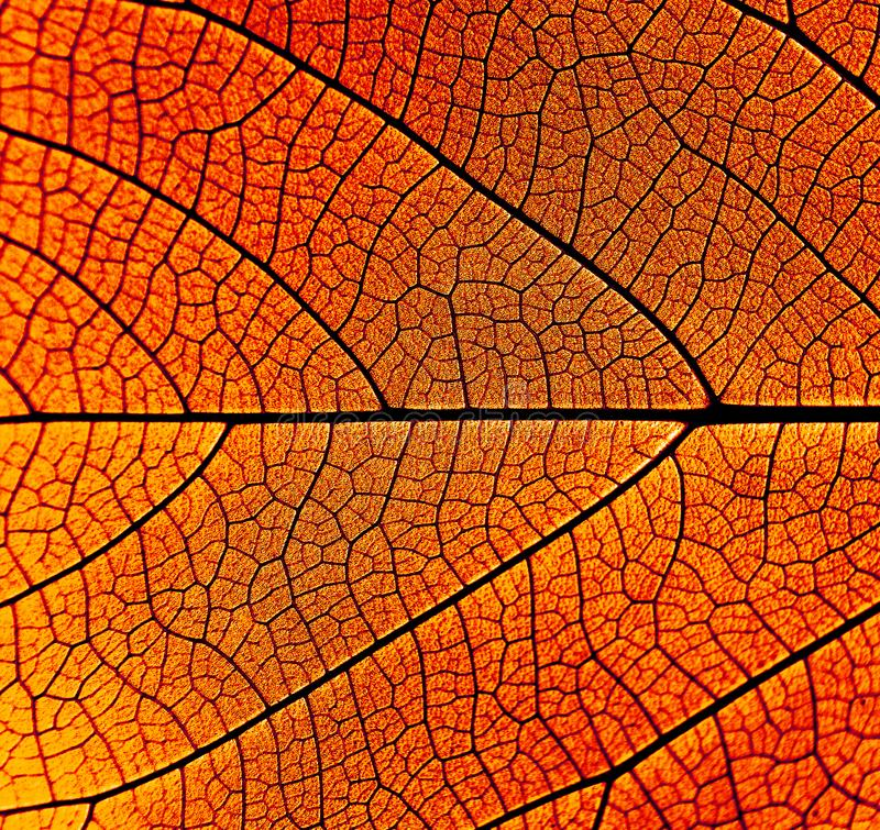 Pattern of leaves for the background royalty free stock photo
