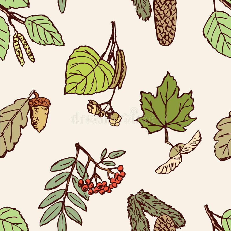 Pattern of the leaves, fruit and seeds of the different trees vector illustration