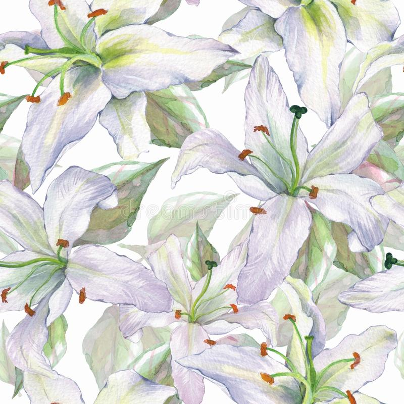 Pattern with lilies 4. Floral seamless watercolor background with royalty free illustration