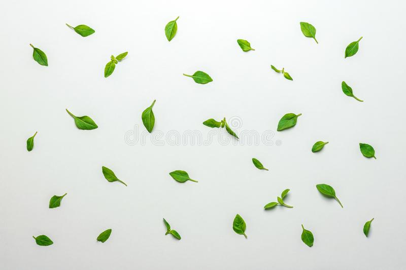 Pattern made of basil green leaves. Minimal summer concept.  royalty free stock photos