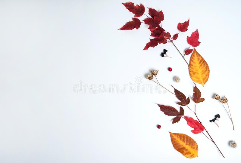 The pattern is made of colorful leaves, black and red berries, wild grass seeds on a white background. Autumn composition. The pattern is made of colorful stock photography