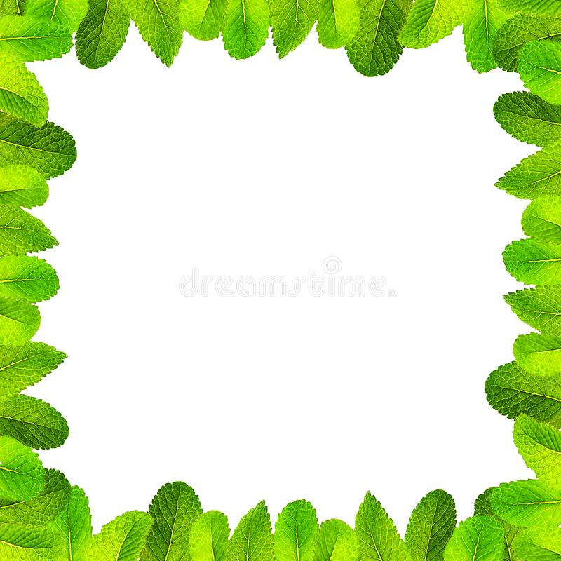 Pattern made of fresh flying green mint leaves on trendy 2020 neo mint color on white background, isolated. stock photos