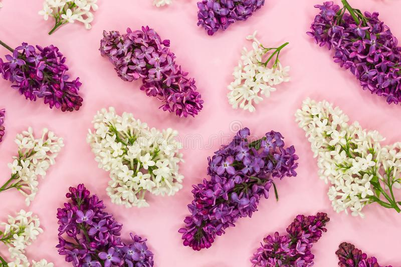 Pattern made of lilac flower branches on pastel pink background. Romantic abstract syringa flower pattern. Top view royalty free stock images