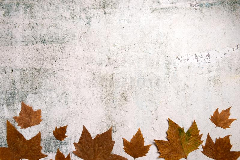 Pattern made of red and yellow fall leaves on concrete background, autumn concept. Flat lay, top view royalty free stock image