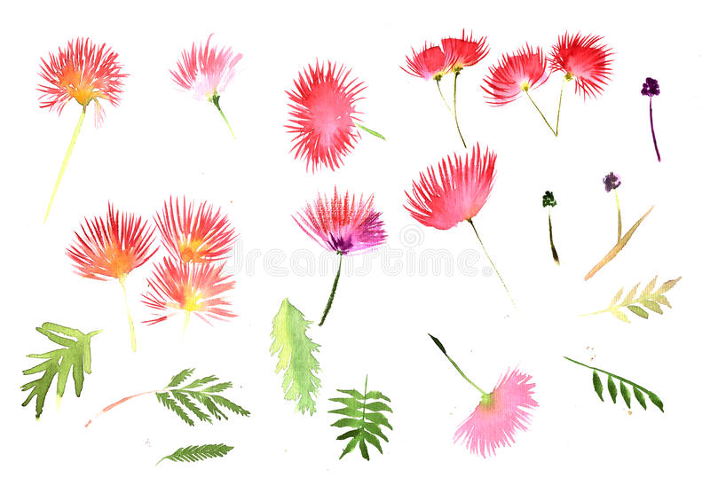 Pattern Mimosa Albizia julibrissin foliage and flowers vector illustration