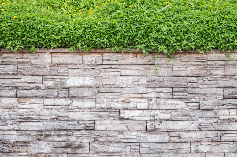Pattern of natural stone wall and green ivy. Garden decorative stock image