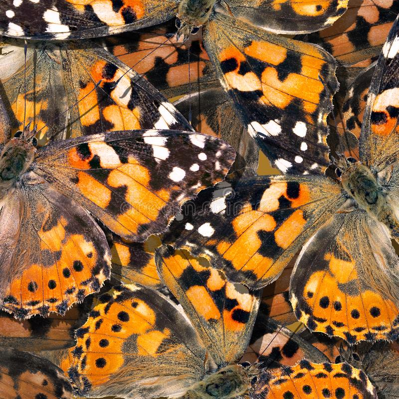 pattern of orange butterflies texture background. butterfly ornament painted lady royalty free stock photo