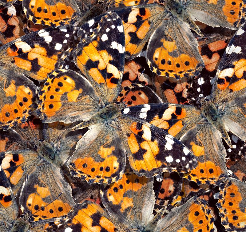 pattern of orange butterflies texture background. butterfly ornament painted lady royalty free stock photography