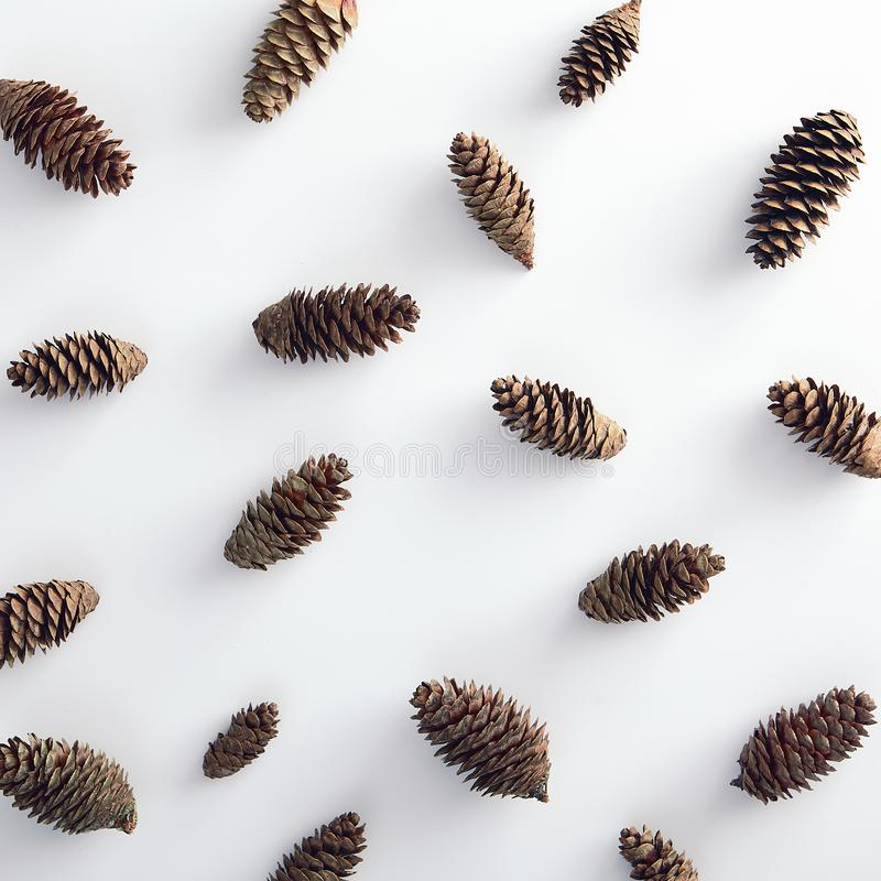 Pattern with pinecone on white background stock images