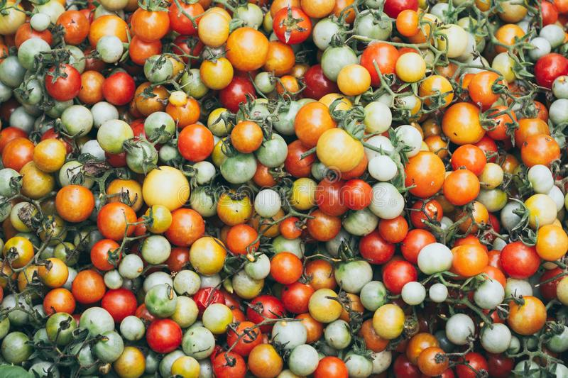 Pattern of red yellow, and green tomato background stock image