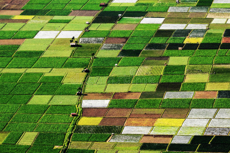 Pattern of ricefield. A Pattern of ricefield in sembalun village royalty free stock photo