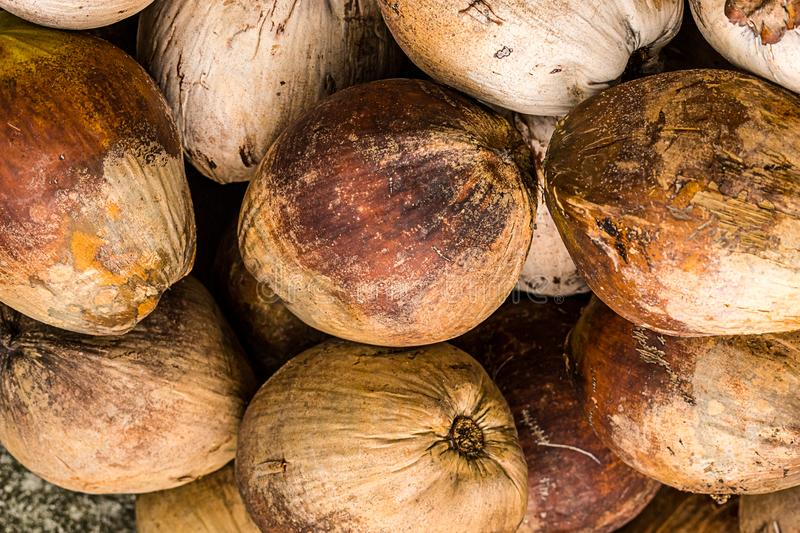 Pattern of round brown palm fruits background texture natural whole many pile nuts stock photo