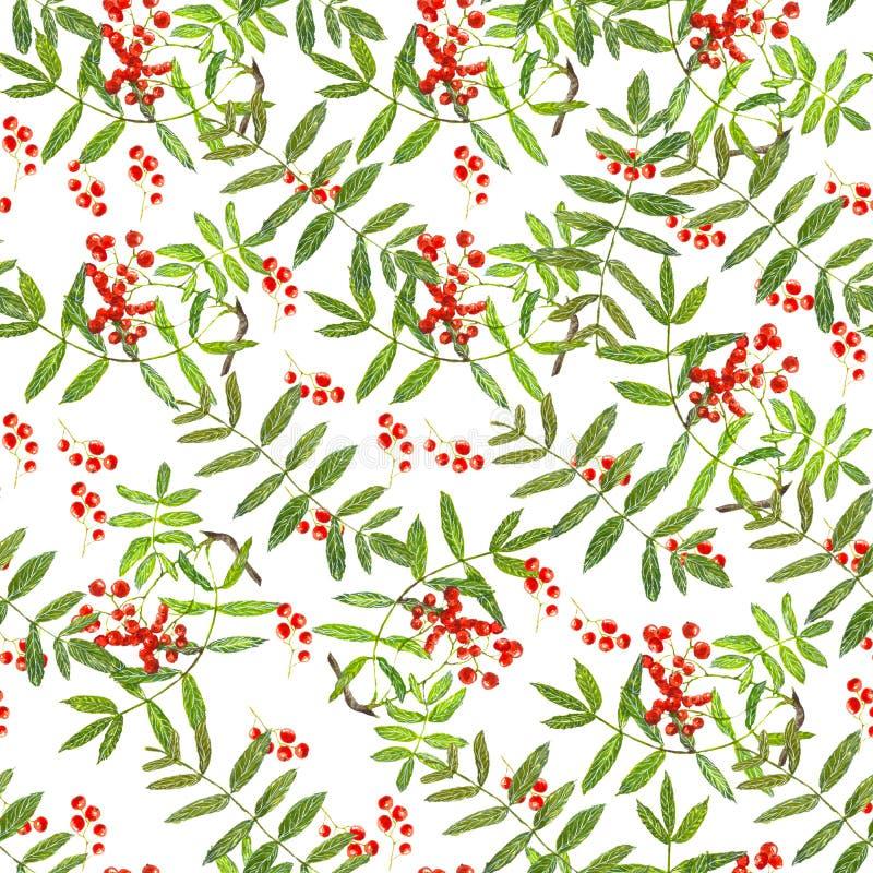 Pattern rowan stock photos