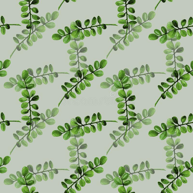 Pattern seamless watercolor boxwood branch with green leaves isolated in light green background stock images