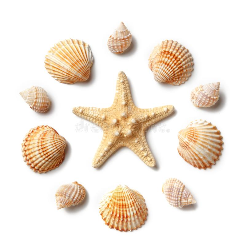 Pattern of seashells and starfish isolated on a white background. Flat lay, top view stock image