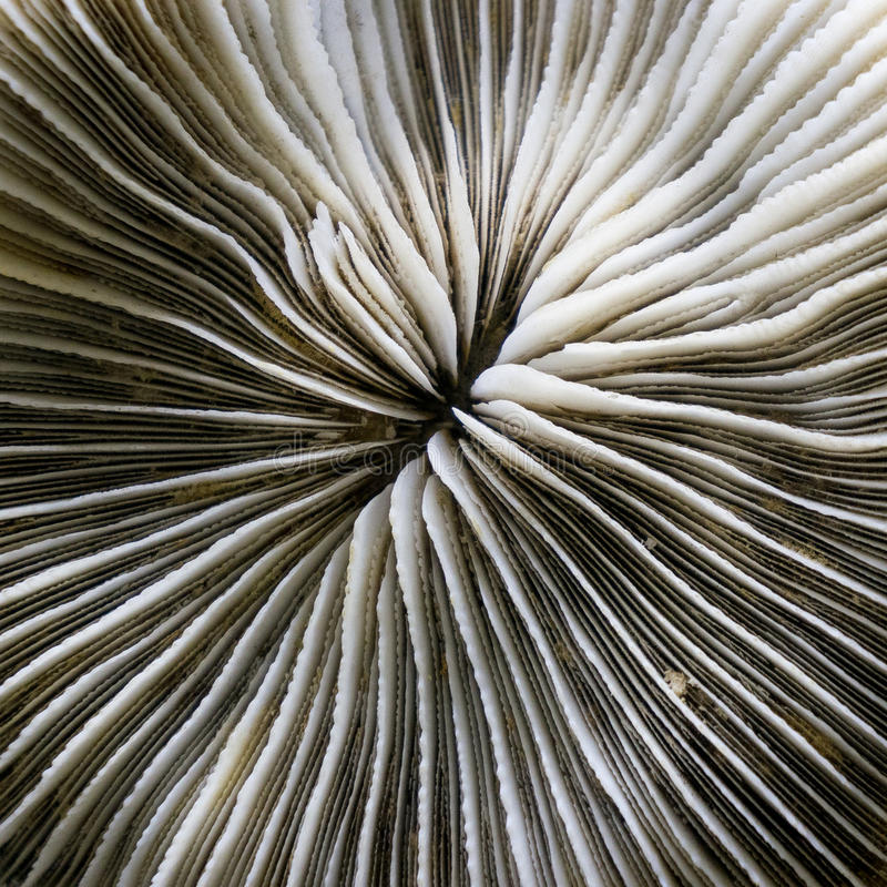 Pattern shell. A perfect close up of an pattern shell stock images
