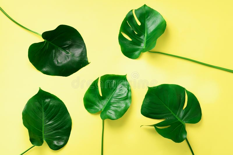 Pattern of tropical monstera leaves on yellow background. Flat lay. Top view. Pop art design, creative and exotic summer concept. stock image