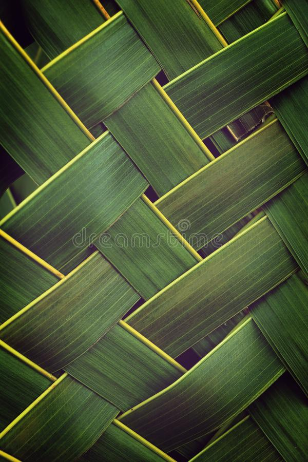 Pattern weaving of coconut leaves, green nature texture royalty free stock image
