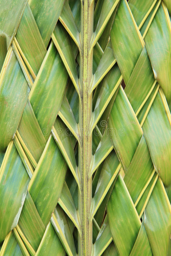 Pattern weaving of coconut leaves royalty free stock image