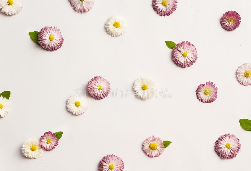 Pattern of white and pink daisies stock photos