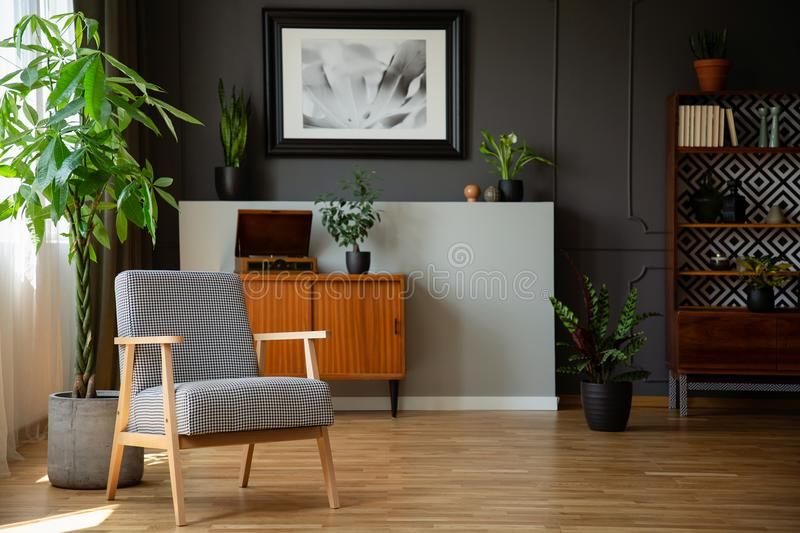Patterned wooden armchair next to plant in grey living room interior with poster. Real photo. Concept royalty free stock photo