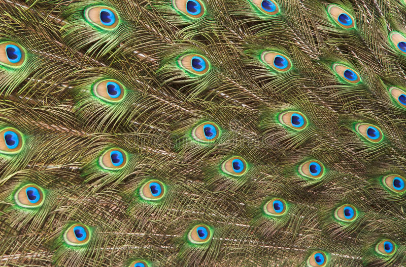 patterns made of peacock feather stock photography