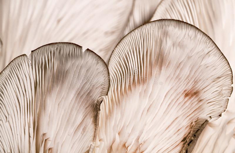 Patterns on a mushroom stock images