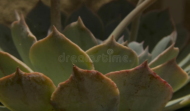 Patterns in nature royalty free stock photography