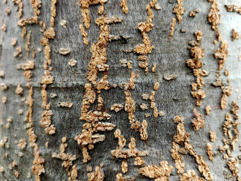 Patterns that occur on the surface of trees in the garden. Patterns that  on the surface of trees in the garden. Nature, natural, backdrop, background, desktop stock images