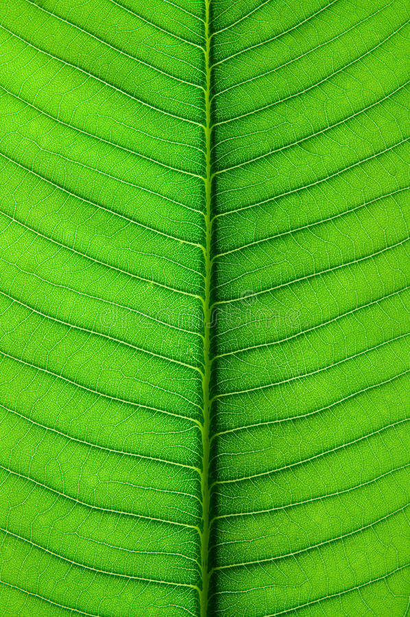 Free Patterns Of The Leaves Royalty Free Stock Images - 15698609