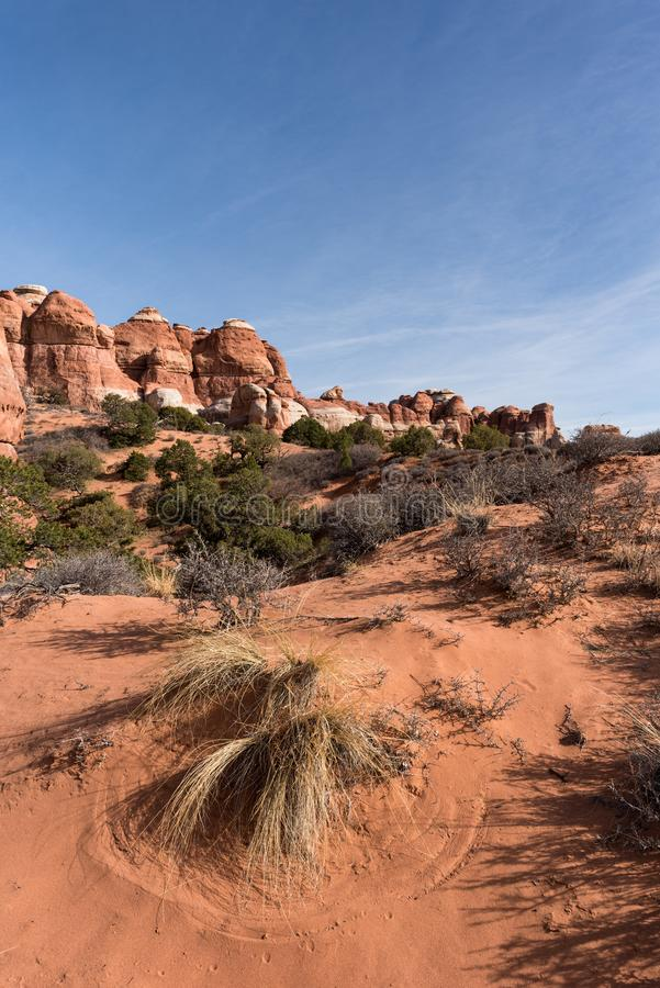 Patterns in the Red Soil - Canyonlands National Park Needles District Utah stock photos