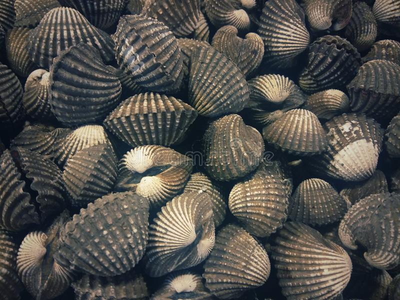 Patterns and textures of large-scale mollusks. With close range for marine animals or seafood stock photos