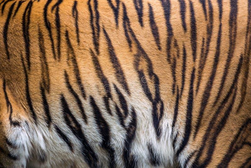 Patterns of tiger skin. stock photo