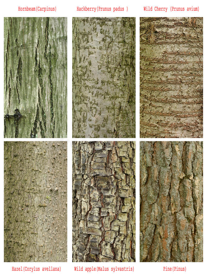 Patterns of trees trunk. Patterns set of wild forest trees trunk royalty free stock photos