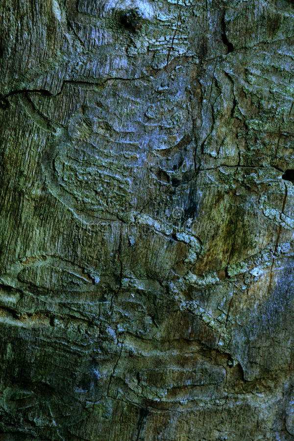 Patterns in wood stock image