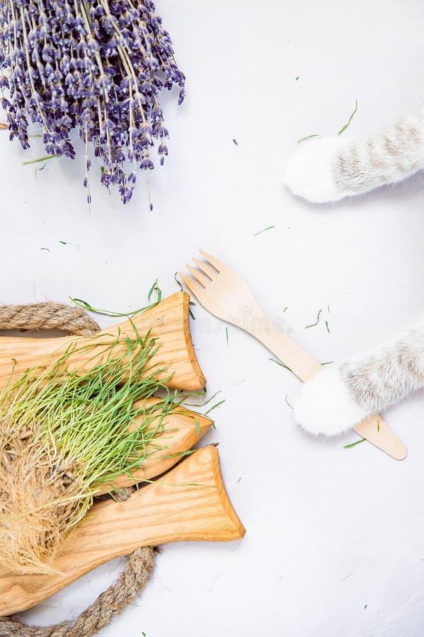 Pattes d'une verticale plate se tenante de disposition de fourchette en bois d'eco du chat le blanc photo stock